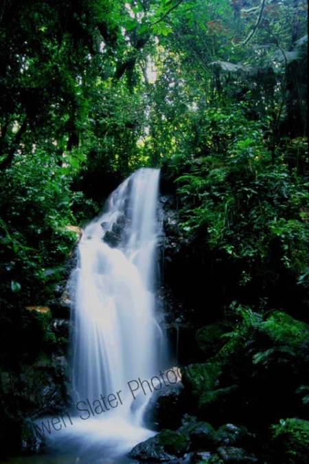 bwindi_waterfall.jpg