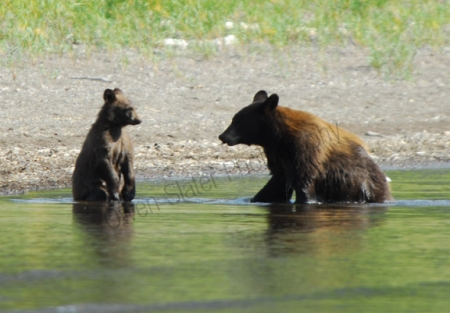 linnet-lake-bear-and-cub.jpg