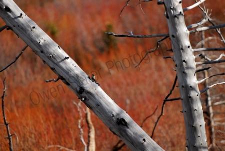 dead-wood.jpg