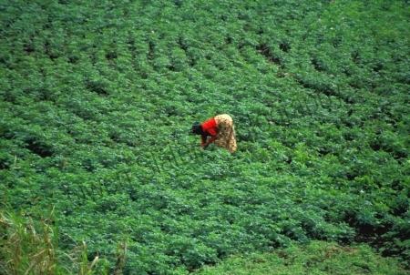 woman_gardening.jpg