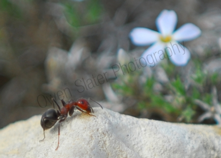 ant-and-flower.jpg
