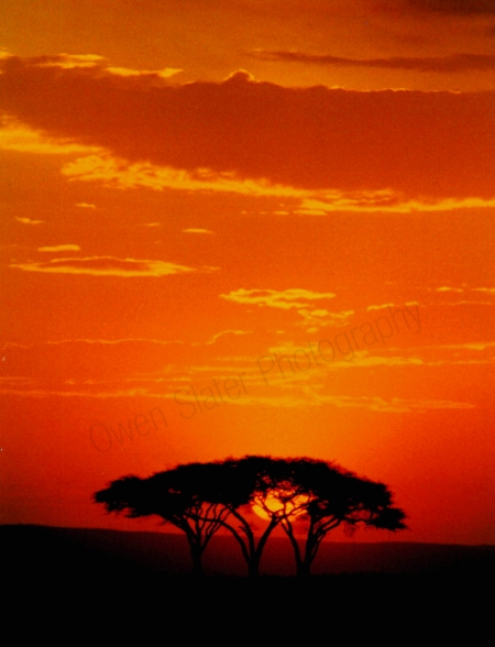serengeti_sunset1.jpg
