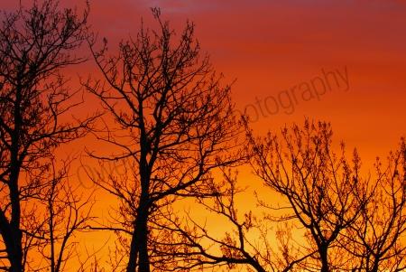 trees-and-sunrise.jpg