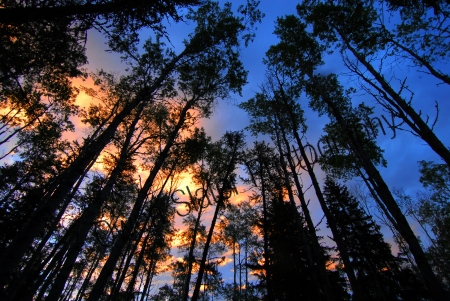 boreal-forest-sunrise.jpg