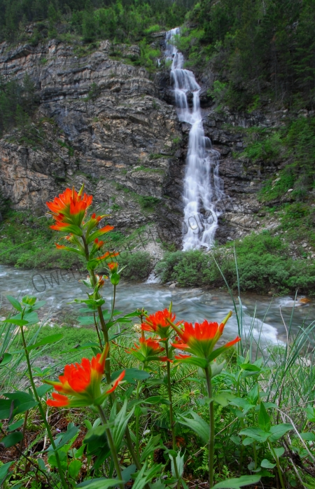 paintbrush-flowers-and-waterfall.jpg