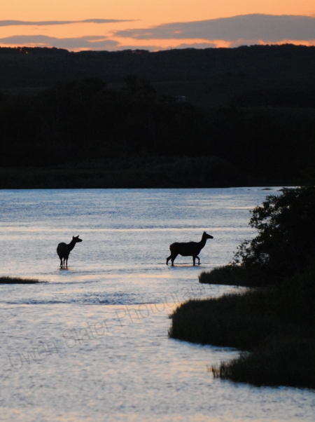 elk-silhoette-in-river.jpg