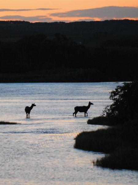 elk-silhoette-in-river.jpg