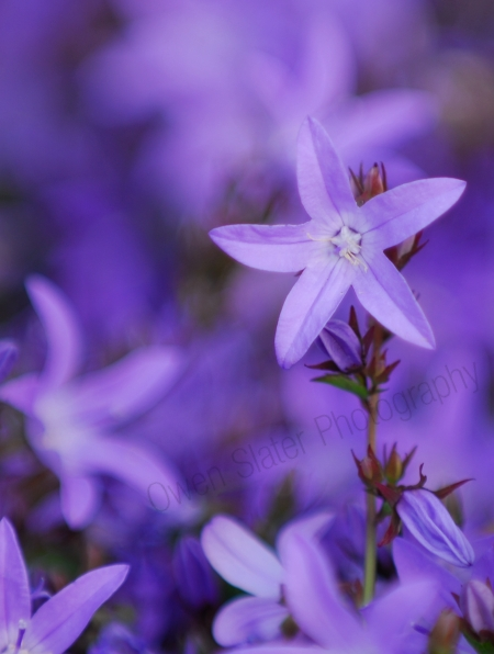 purple-flowers.jpg
