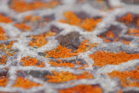 lichen-and-patterned-rock.jpg