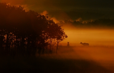 elk-in-fog-at-sunrise