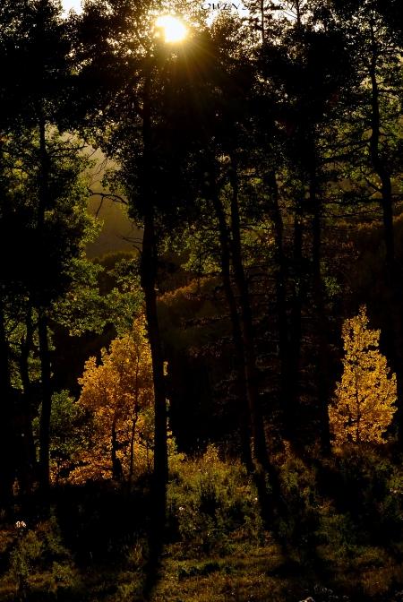 Sunlight through trees fall colours adobe watermark