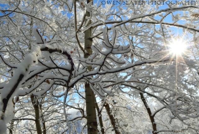 Aspen snow sun