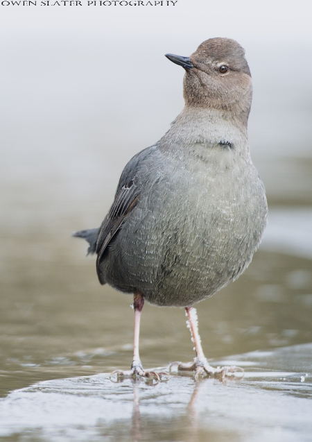 Dipper whats over there PS SS WM