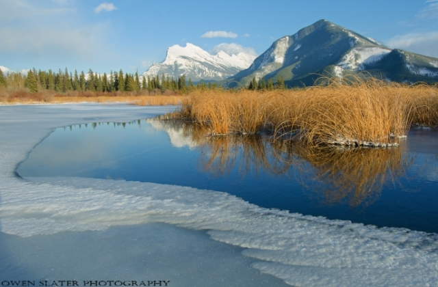 Rundle reeds ice PS LF WM