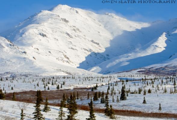 Denali Landscape WM
