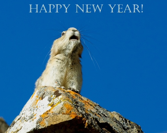 Happy New Year Pika WM