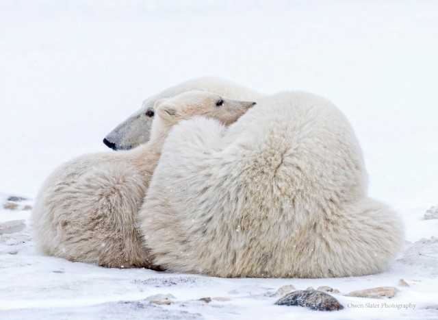 Polar Snuggle WM