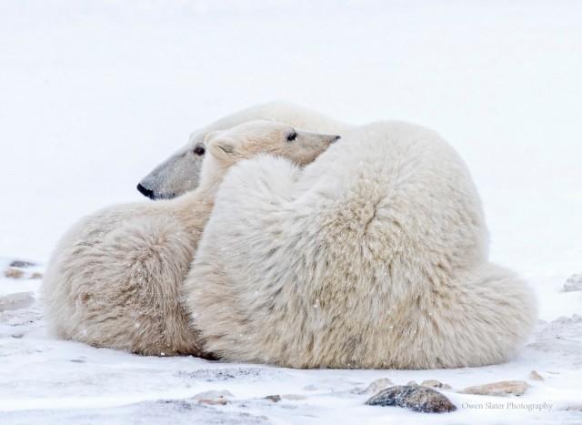 Polar Snuggle WM