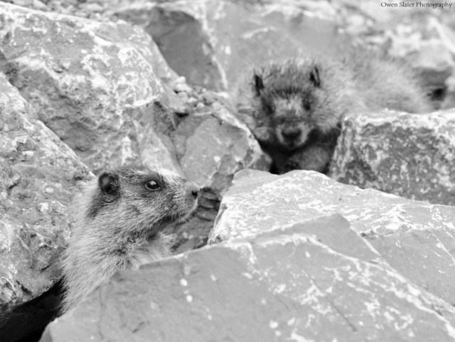 Marmot dead kit approach BW WM